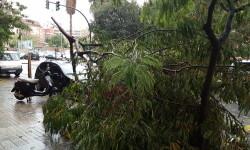 Destrozos por el viento en Valencia 02 nov 2015 (25)