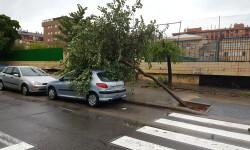 Destrozos por el viento en Valencia 02 nov 2015 (27)
