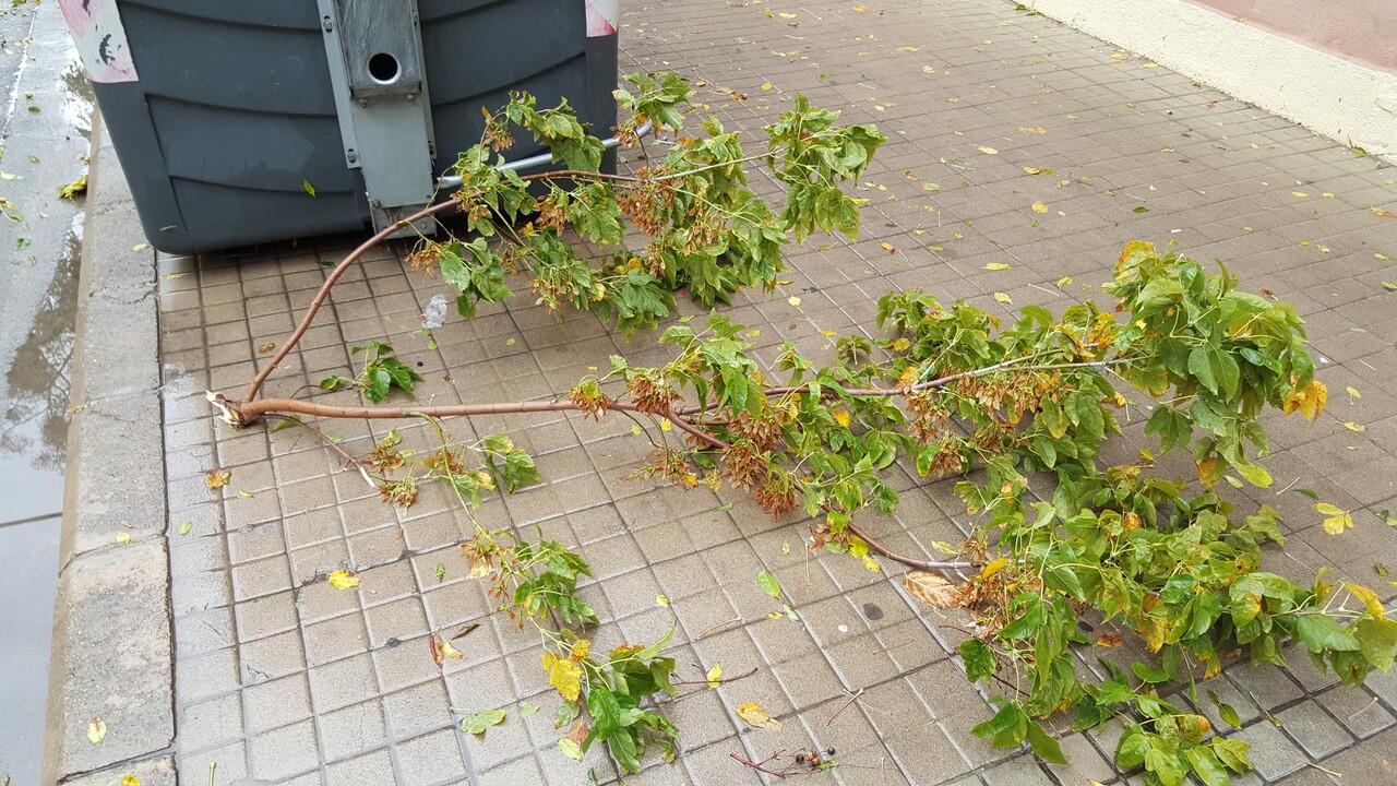 Destrozos por el viento en Valencia 02 nov 2015 (28)