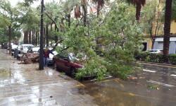 Destrozos por el viento en Valencia 02 nov 2015 (29)