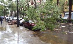 Destrozos por el viento en Valencia 02 nov 2015 (31)