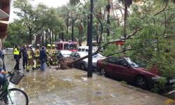 Destrozos por el viento en Valencia 02 nov 2015 (9)