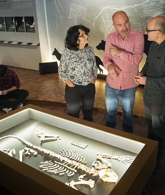 El Museu de Prehistòria presenta el esqueleto más completo de un leopardo pleistocénico hallado en la península ibérica.