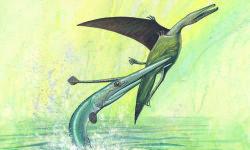 El-pez-que-no-comia-pterosaurios_image_380
