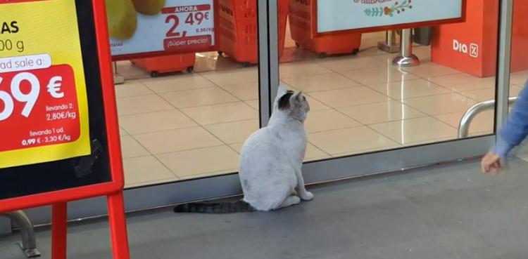 Gato inamovible en la puerta del supermercado cat in front of the supermarket   YouTube