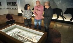 La exposición narra la interacción entre hombres y grandes carnívoros por el uso de las cuevas.