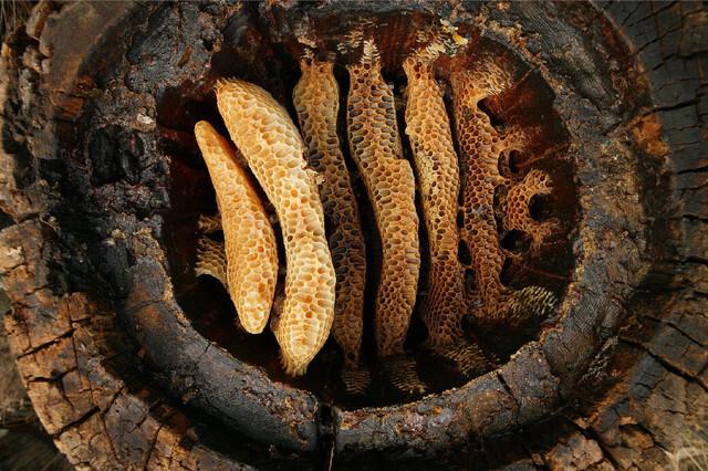 Los-granjeros-neoliticos-ya-usaban-cera-de-abeja-hace-9.000-anos_image640_