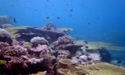 Los-oceanos-victimas-silenciosas-del-cambio-climatico_image_380