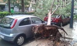 Un árbol cae en el barrio de Zaidia de Valencia golpeando a dos vehículos.