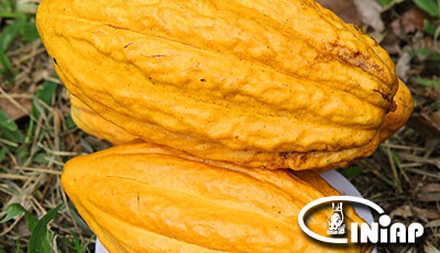 formato400x230-cacao-11