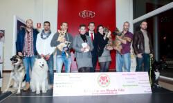 151211Presentació calendari solidari del Servei Municipal de Bombers de Castelló  la manada feliz-bomberos (2)