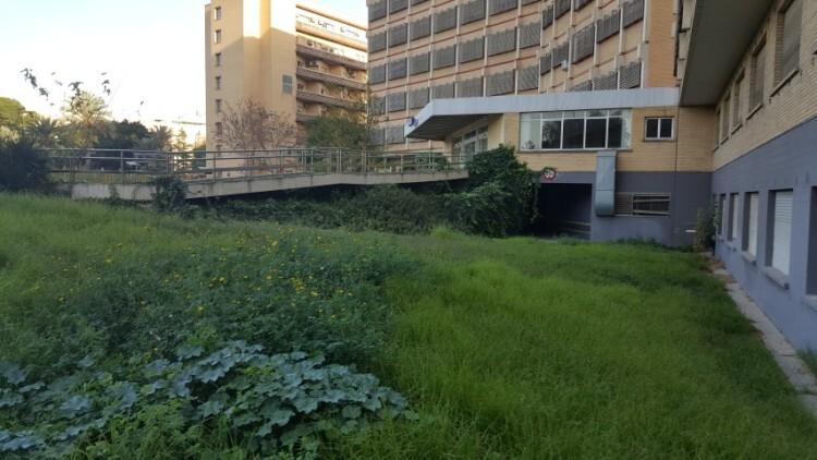 Hospital antiguo la fe de Valencia (15) (Small)