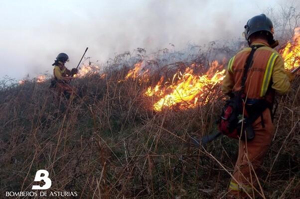 Se reducen a 20 los incendios activos en Asturias gracias a las lluvias y los trabajos de extinción.