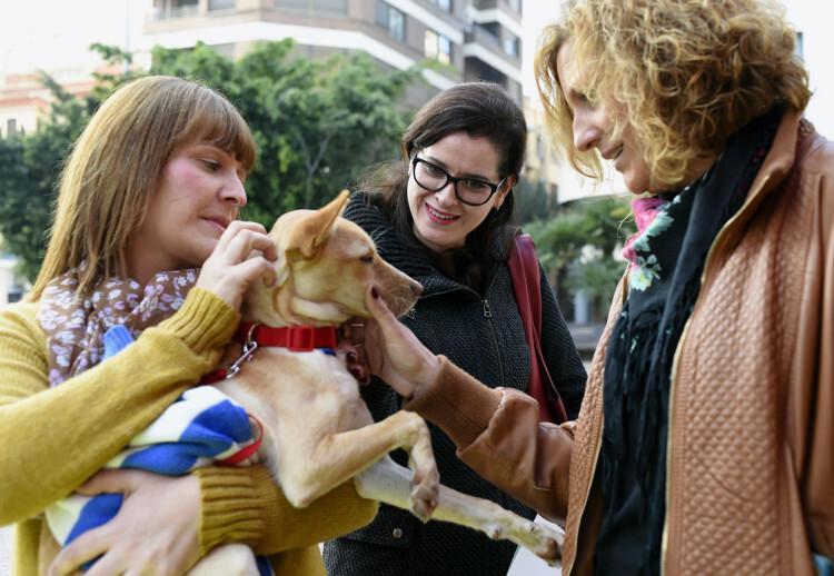 entrega cheque solidario protectoras de animales_1