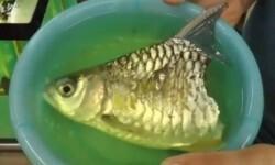 pez_mitad_cuerpo