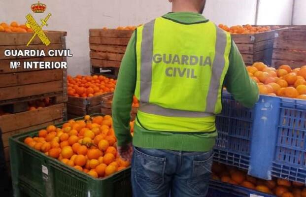 16 detenidos y otras nueve personas investigadas por el robo de 84.000 kilos de naranjas.
