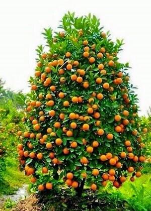El 31 de enero es el Día del Árbol.