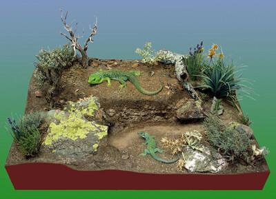 Exposición 'Reptiles y anfibios españoles'.