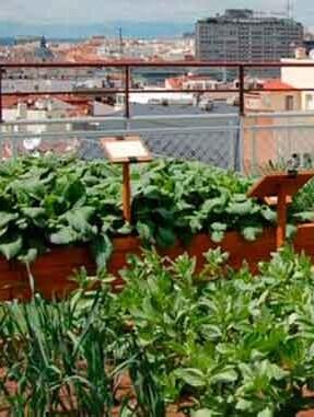 Huertos sostenibles en una ciudad.