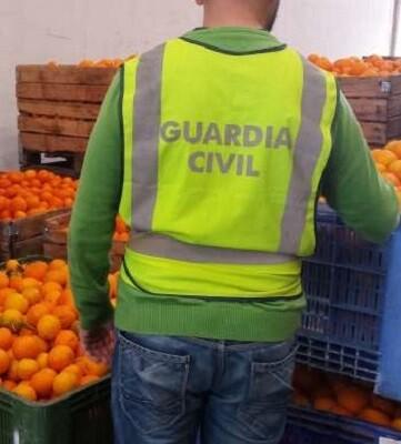 Por las pesquisas obtenidas por componentes del Equipo ROCA de la Guardia Civil, se pudo comprobar que 25 personas se dedicaban a sustraer productos del campo.