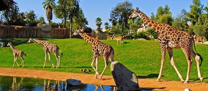 El espacio reúne en la actualidad a 3.500 animales de 160 especies.