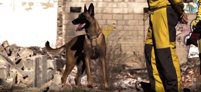 El objetivo de este ejercicio es someter a los guías y sus perros a situaciones tácticas fuera de su entorno.