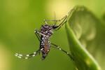 La-OMS-considera-que-el-virus-del-Zika-es-una-amenaza-de-proporciones-alarmantes_image_380