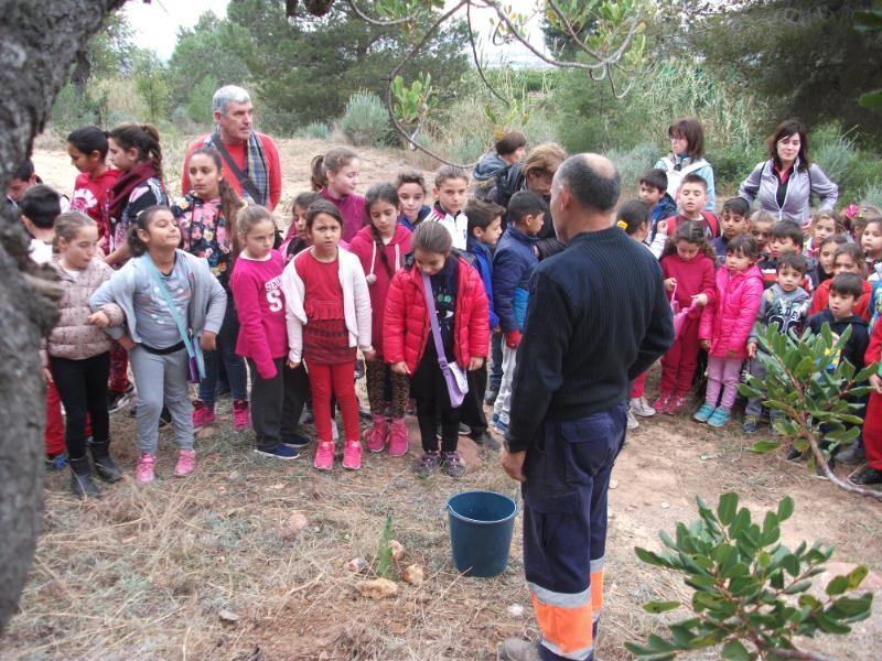 plantación magdalena