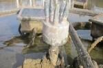Fuente del Palau de la Música