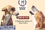 La protectora Podencos SOS de Valencia organiza un tapeo benéfico para costear los gastos veterinarios de sus animales en adopción.