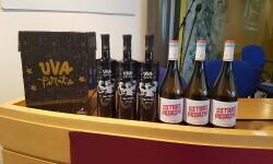 Peculiar Wines la última apuesta de la bodegas Vicente Gandía con los vinos Ostras Pedrín y  Uva Pirata (8)