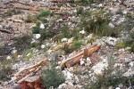 Se reforesta en Chiva la zona quemada en 2014 en Sierra Perenchiza.