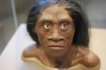 Reconstrucción de una mujer de Homo floresiensis. / Karen Neoh