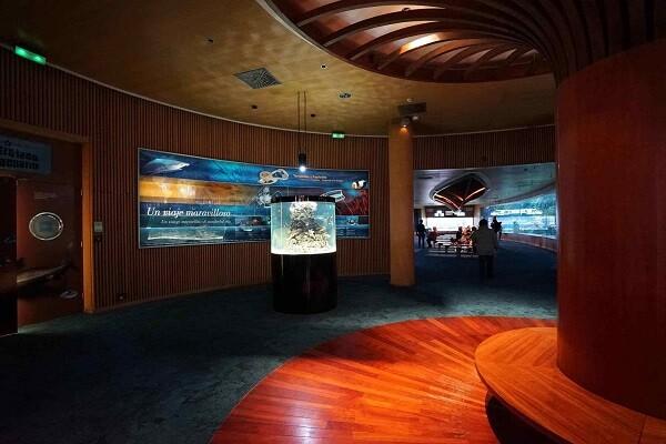 El Oceanogràfic de Valencia estrena un nuevo acuerio cilíndrico 'Nemo' dedicado a peces payaso.