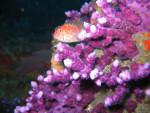 Peces de arrecifes1