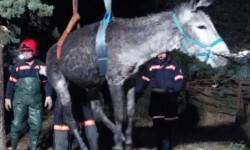 Bomberos de Castellón. rescatan a un burro de una fosa (2)