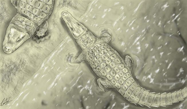 El-yacimiento-de-Lo-Hueco-desvela-un-nuevo-cocodrilo-del-Cretacico-Superior_image_380