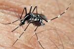 La Diputación de Valencia destina un millón de euros a la campaña contra el mosquito tigre.