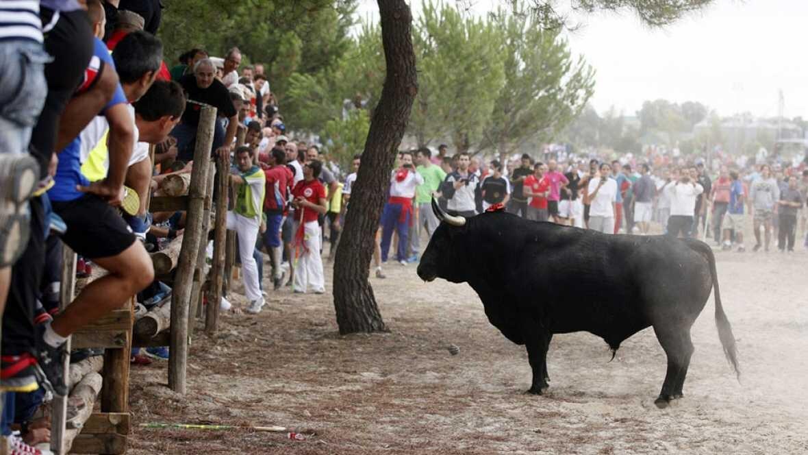 La Junta de Castilla y León prohíbe que se mate al Toro de la Vega (1)
