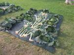 Palo Alto Market ya está en Valencia verduras ecologico  (4)