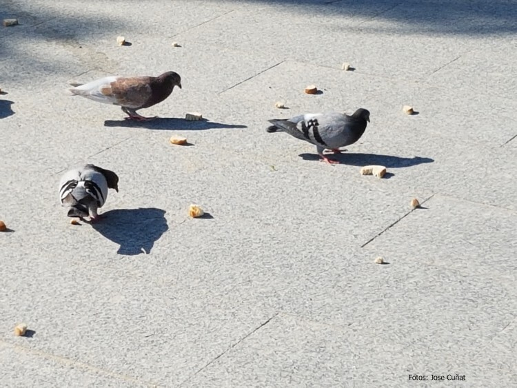 dar de comer a las palomas jose cunat 20160516_094919