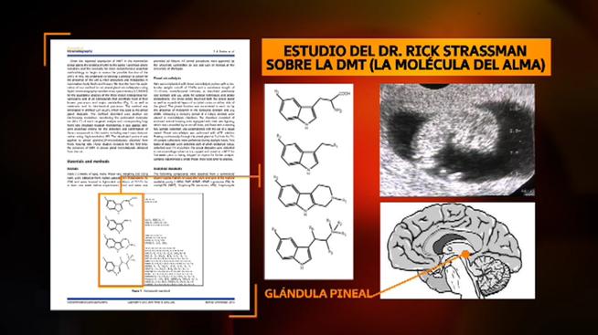 estudio-cientifico-momento-espiritu-ensambla_MDSVID20160501_0003_23