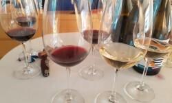 presentación nuevos vinos Bodegas Ontinium 20160523_190214 (51)