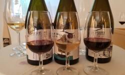 presentación nuevos vinos Bodegas Ontinium 20160523_190214 (52)