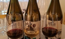 presentación nuevos vinos Bodegas Ontinium 20160523_190214 (53)