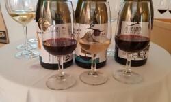 presentación nuevos vinos Bodegas Ontinium 20160523_190214 (54)