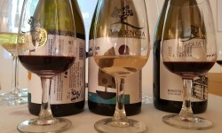 presentación nuevos vinos Bodegas Ontinium 20160523_190214 (55)