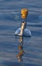 Botella con mensaje en el mar.