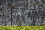 Detenidos-agricultores-incendio-Carcaixent-Valencia_EDIIMA20160623_0174_5