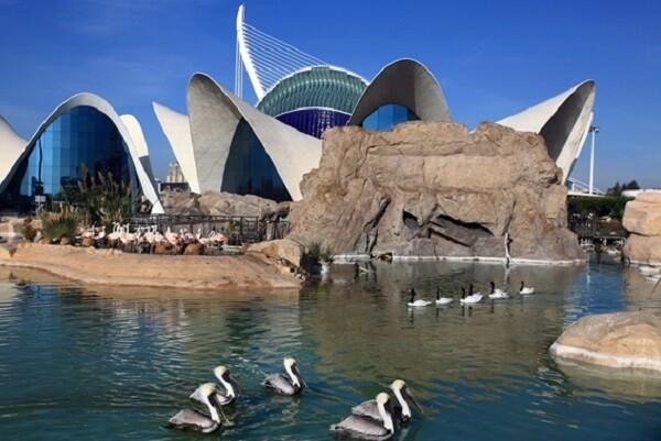 El Oceanogràfic celebra el Día Mundial de los Océanos-cómo se teje el mar.